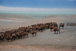 Gobi Çölü Hayvanları
